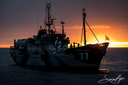 170204-SA-Steve-Irwin-at-sunrise-001-6037