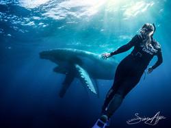 20120810-Humpbacks_Deborah_Bassett_encounter