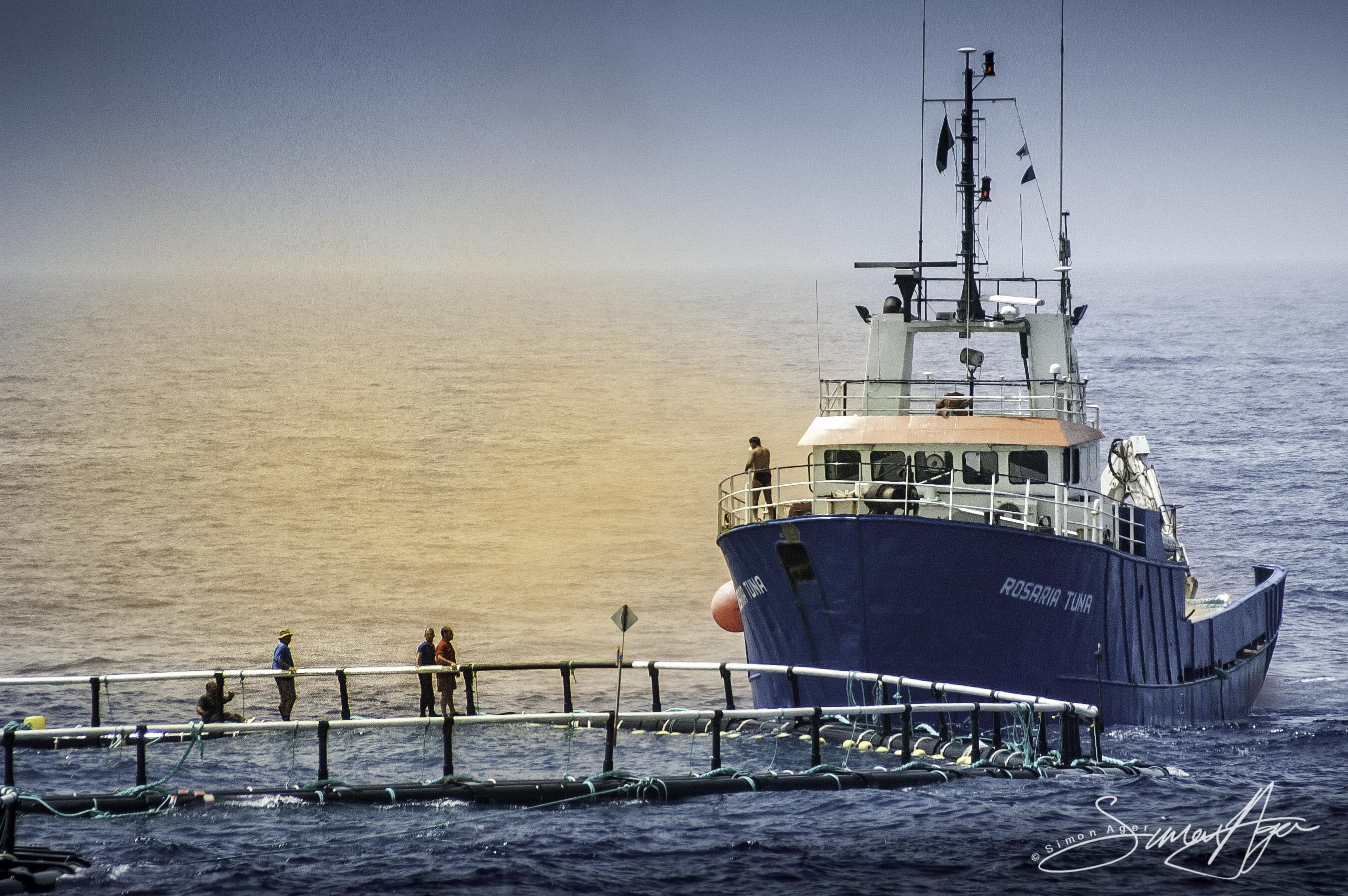 SA Libya Libyan Waters Sea Shepherd Releasing Bluefin Tuna Rosaria  cage Smoke Grenade 009 2266-Edit