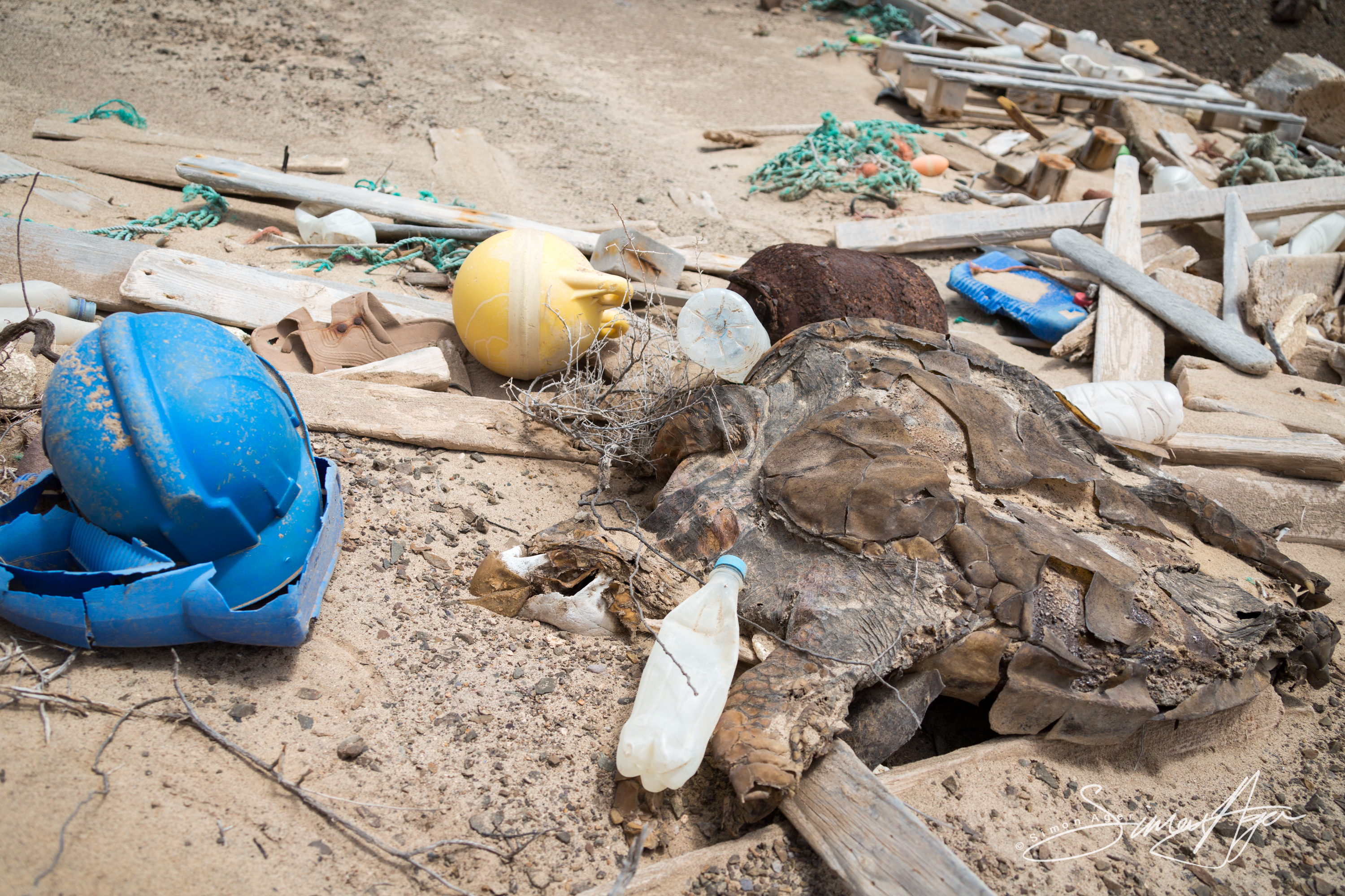 140822-SA-001-A-lost-turtle-surrounded-by-garbage-cooked-in-the-midday-sun -2479