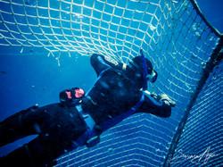 SA Libyan Waters Sea Shepherd Releasing Bluefin Tuna Delta Diver Tuna Net 001 3322
