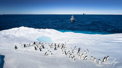 161219-SA-OW-Adelie-penguins-hitching-a-ride-on-a-berg-011-0103