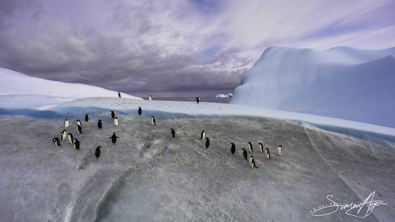 170219-SA-Adelie-penguins-on-ice-019-0447
