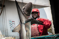 160704-SA-Geuotec-shark-bycatch-dumped-into-the-ocean-2