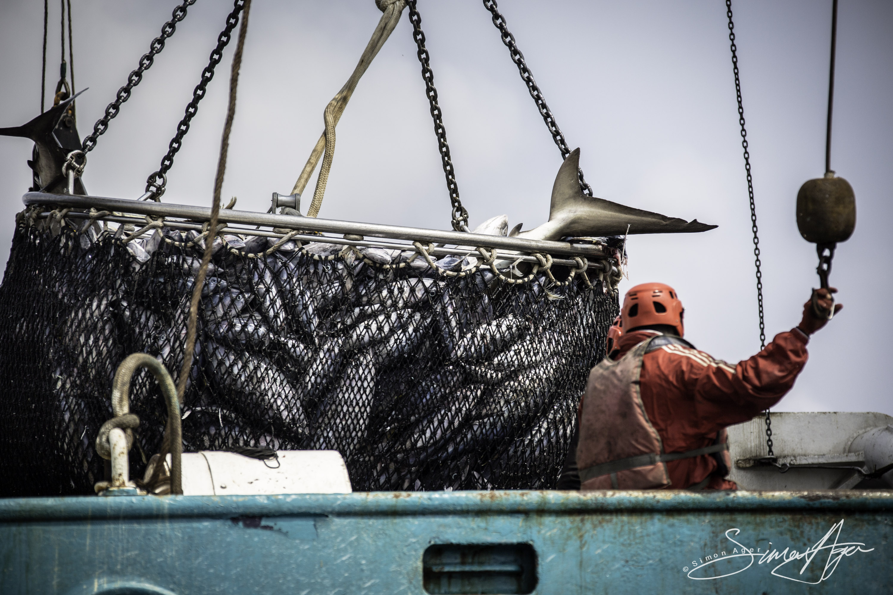 160704-SA-Geuotec-shark-bycatch-dumped-into-the-ocean-7018