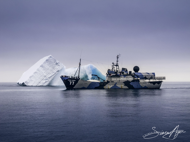 130115_SA_Steve_Irwin_passes_in_front_of_iceberg_001