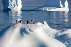 161217-SA-OW-Adelie-penguins-atop-icebergs-at-sunrise-013-3446