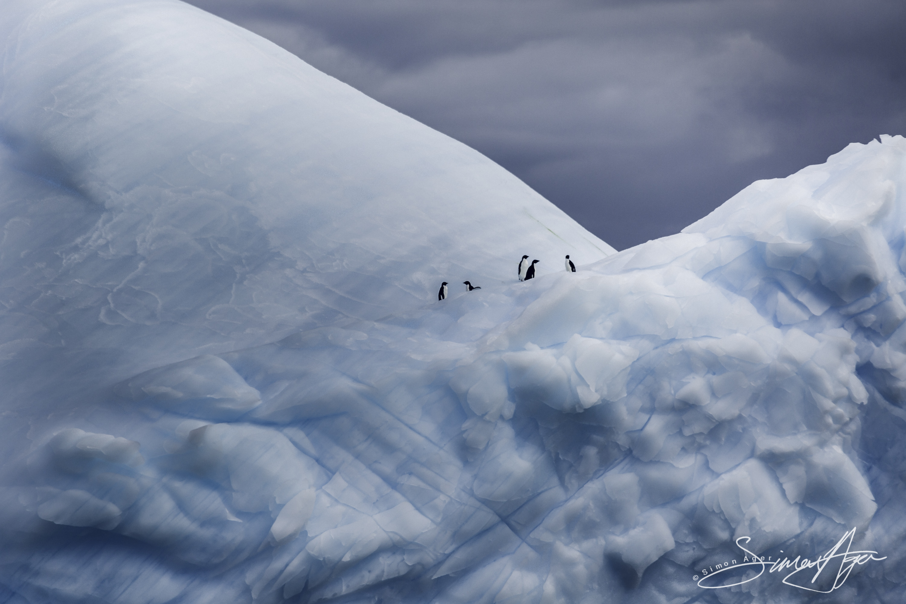 170212-SA-Adelie-Penguins-on-ice-001-6828