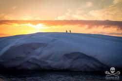 110208_SA_Penguins_Growlers_Sunset_006_7017.jpg