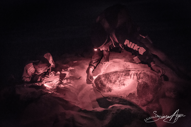 140816-SA-001-Marine-biologists-Maira-Kenny-measure-Loggerhead-turtle -1259