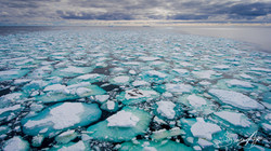 170205-SA-Fur-seals-laze-around-on-ice-pans-016-0352