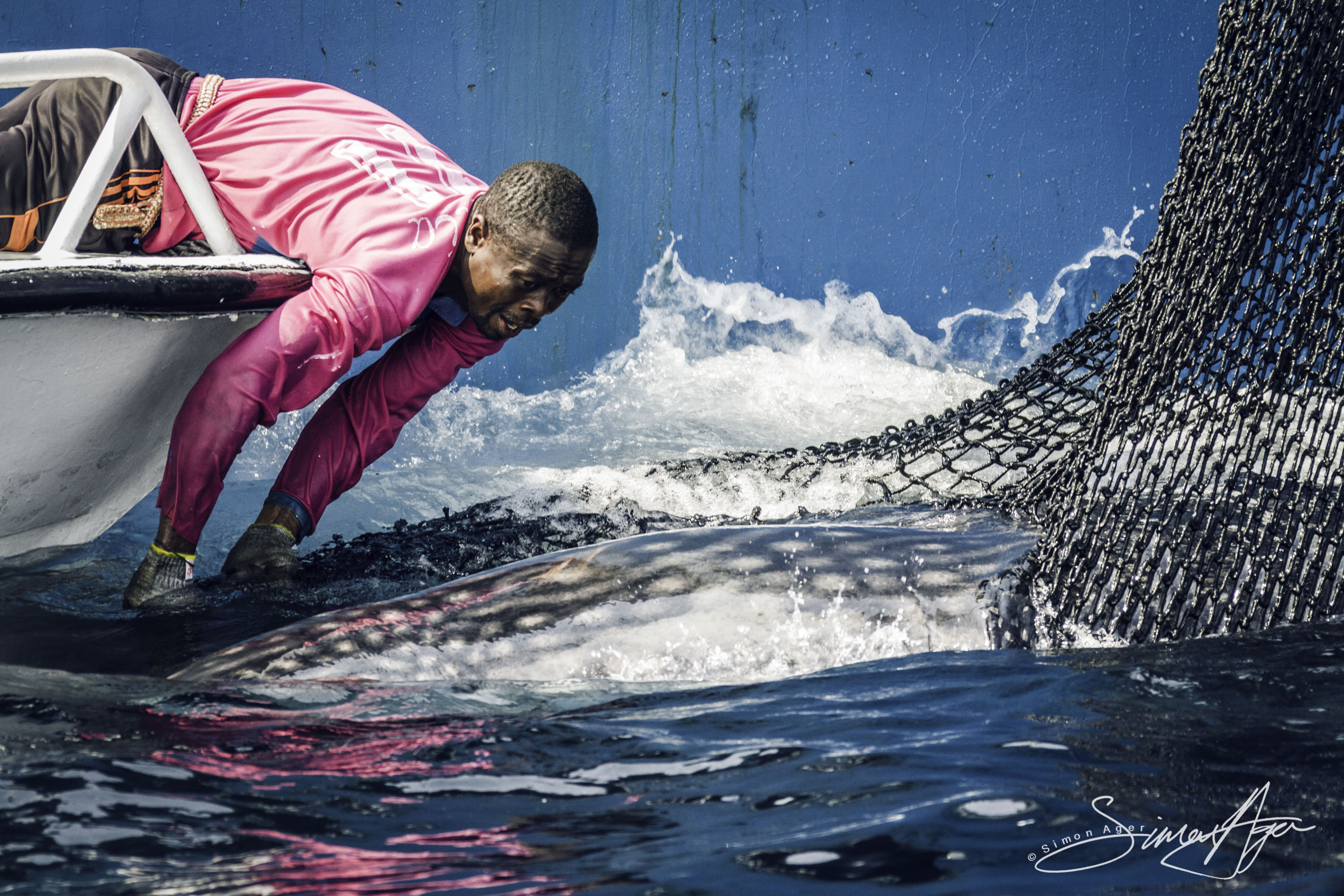 160630-SA-Txori-Berri-SS-crew-assist-in-freeing-of-whale-shark-from-purse-seiner-net-1869