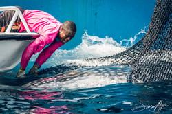 160630-SA-Txori-Berri-SS-crew-assist-in-freeing-of-whale-shark-from-purse-seiner-net-1869