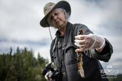 160811-SA-Cypress-Bay-Fish-farm-mort-totes-contain-decomposing-wild-Pacific-salmon-among-farmed-Atla