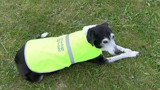 Archaeology Shetland Reflective Dog Vest
