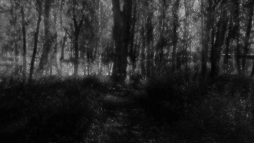 frame0000_bosque_los_condores_15x30cm_fo