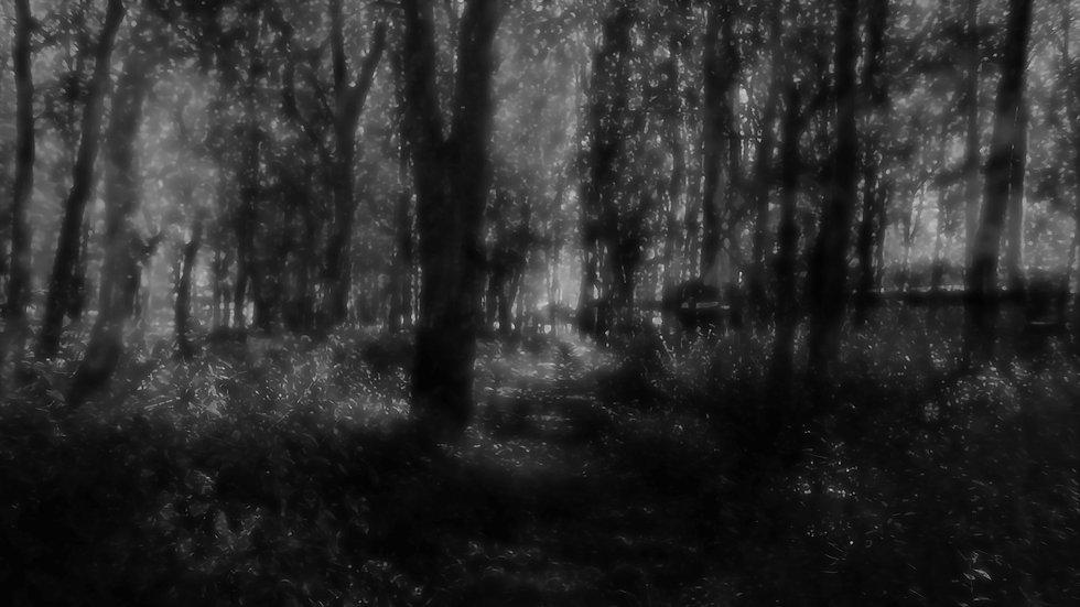 Frame 1131  - Bosque los Cóndores