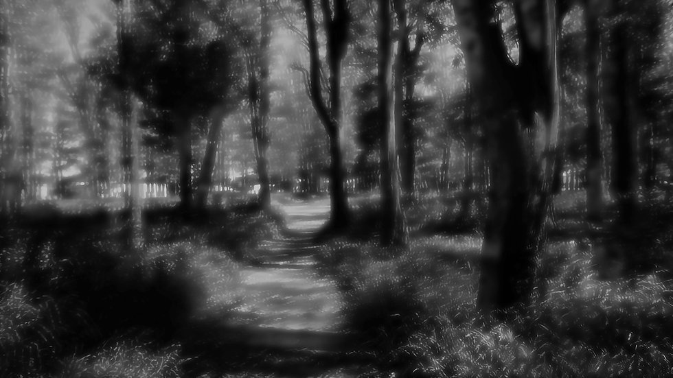 Frame 0609  - Bosque los Cóndores
