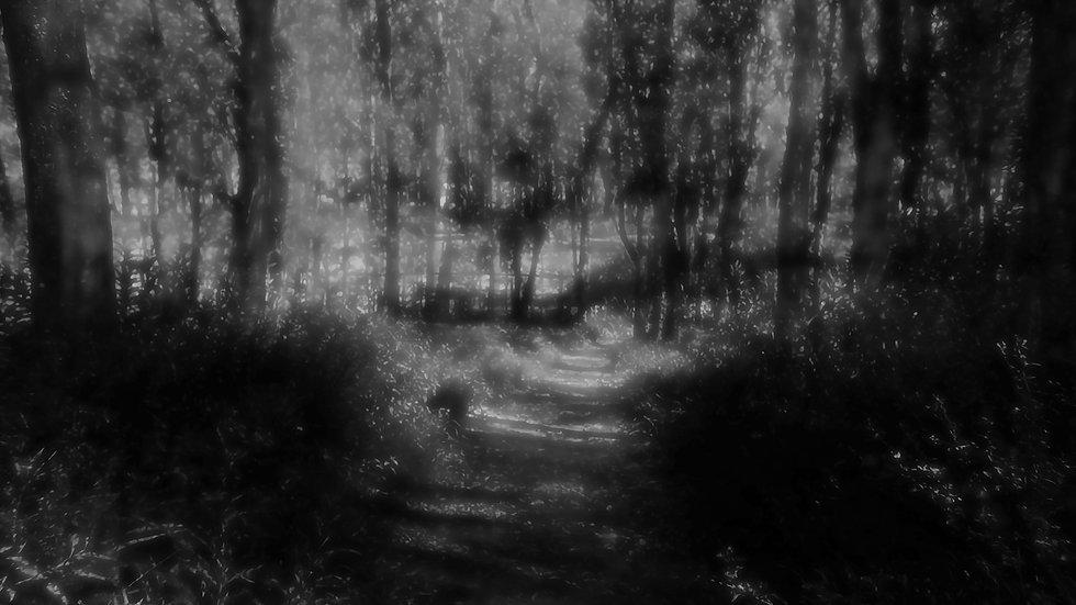 Frame 1015  - Bosque los Cóndores