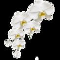 Orchidée.png