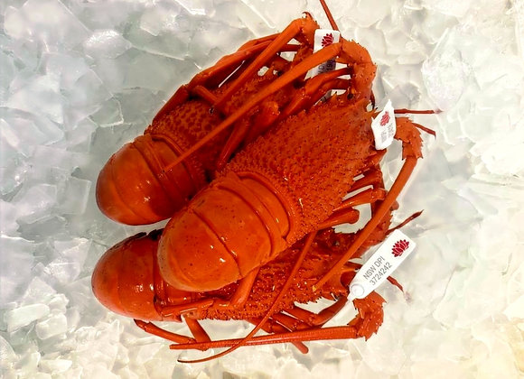Fresh Cooked Local Lobster