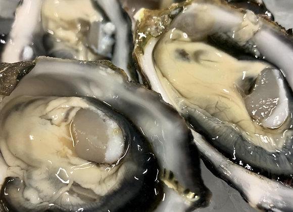 Pacific Oysters (1 Dozen)
