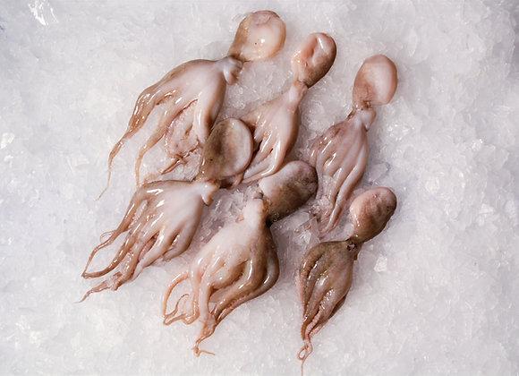 Baby Octopus (500G)