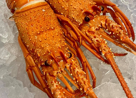 Whole Cooked W.A. Lobster