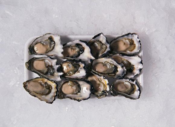Sydney Rock Oysters (1 Dozen)