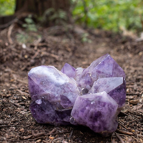 Extra Large Amethyst Cluster