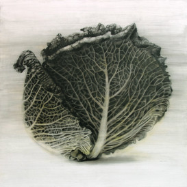 Cabbage dr.JPG