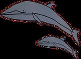 Minke whale.png