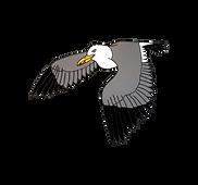 Herring gull.png