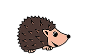 European hedgehog.png