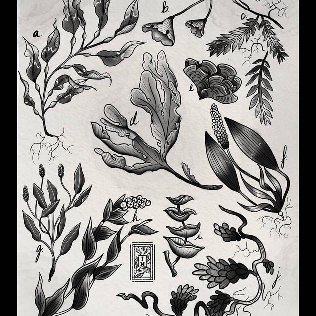 Aquatic Botanicals (2020)