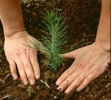 Tree planting at the farm!