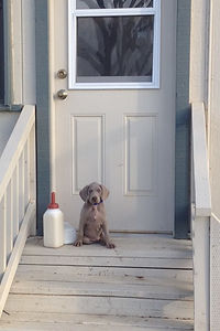 milk bottle on porch.jpg