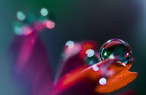 Single_Water_Drop_on_Petal_Macro_Wallpap