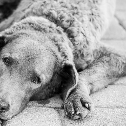 Dogs of Peloton-30.jpg