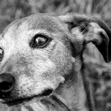 Dogs of Peloton-37_edited.jpg