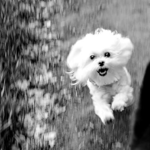 Pet Photography - Boulder, Colorado
