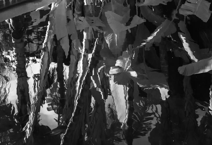 Bananna Tree Reflections