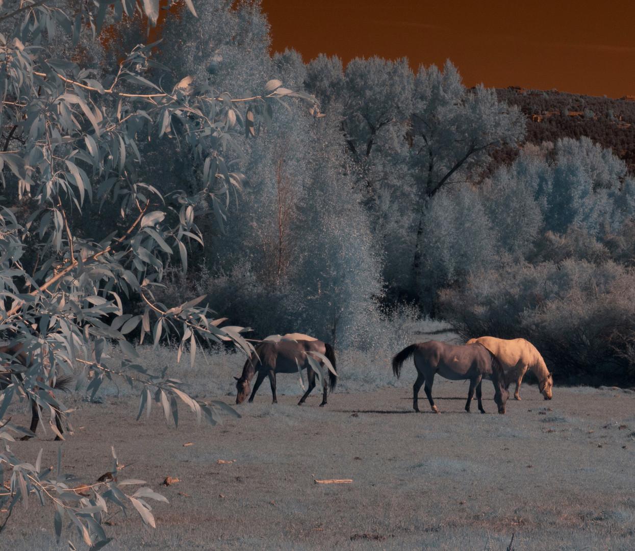 Horses in Aspen.jpg