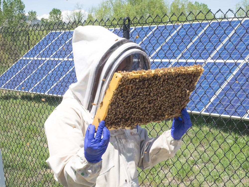 Agriculture Photographer - Bees on Farm with Solar Panels