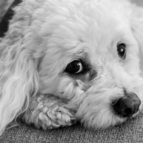 Dogs of Peloton-11.jpg