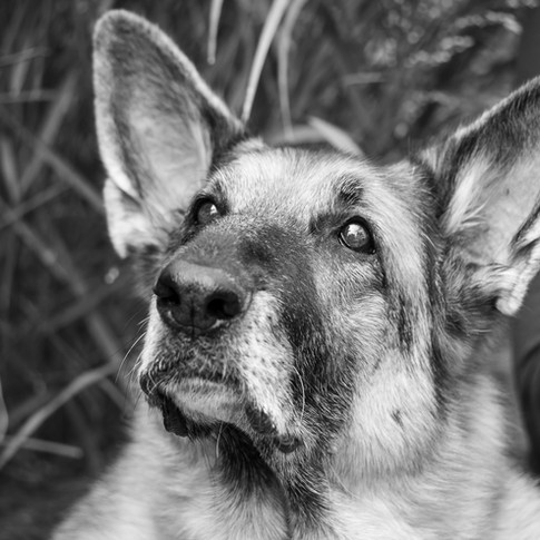 Dogs of Peloton-35.jpg