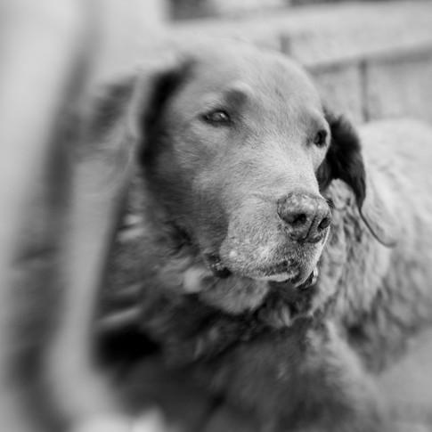 Dogs of Peloton-31.jpg