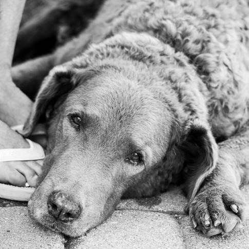 Dogs of Peloton-30_edited.jpg