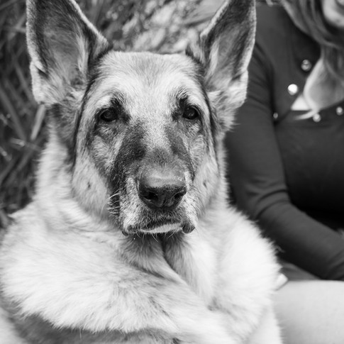 Dogs of Peloton-34.jpg