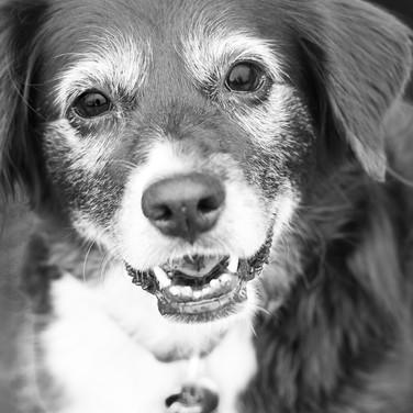 Dogs of Peloton-36.jpg